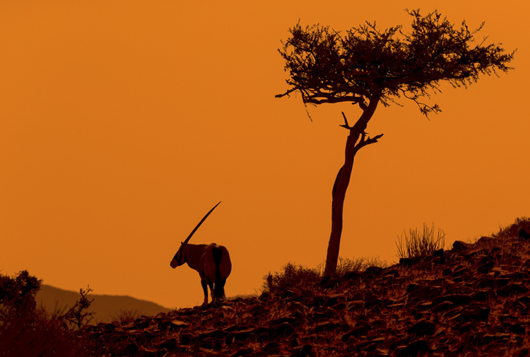 """Unicorn at Sunset"""