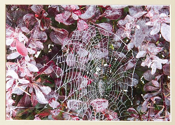 """Web Wonder"""