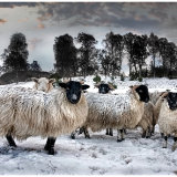 """Winter Flock"""