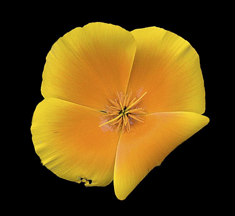 """Yellow Flower"""