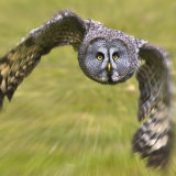 """Zooming Owl"""