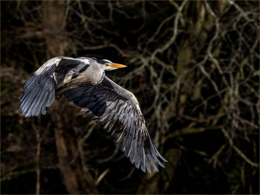 2nd Heron
