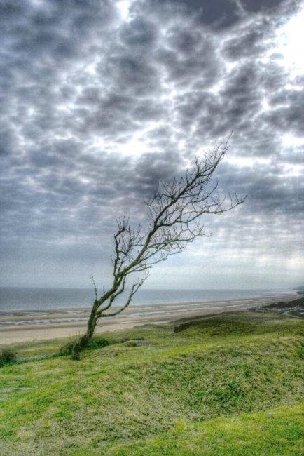 Lonely Tree Omaha Beach