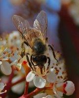 01 HelenBurns Busy Bee