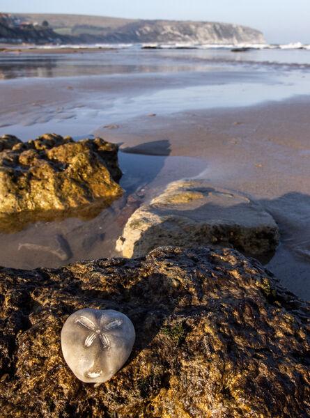 Fossil on the Beach