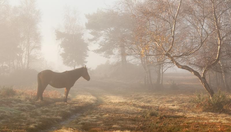 Hartland Moor Pony