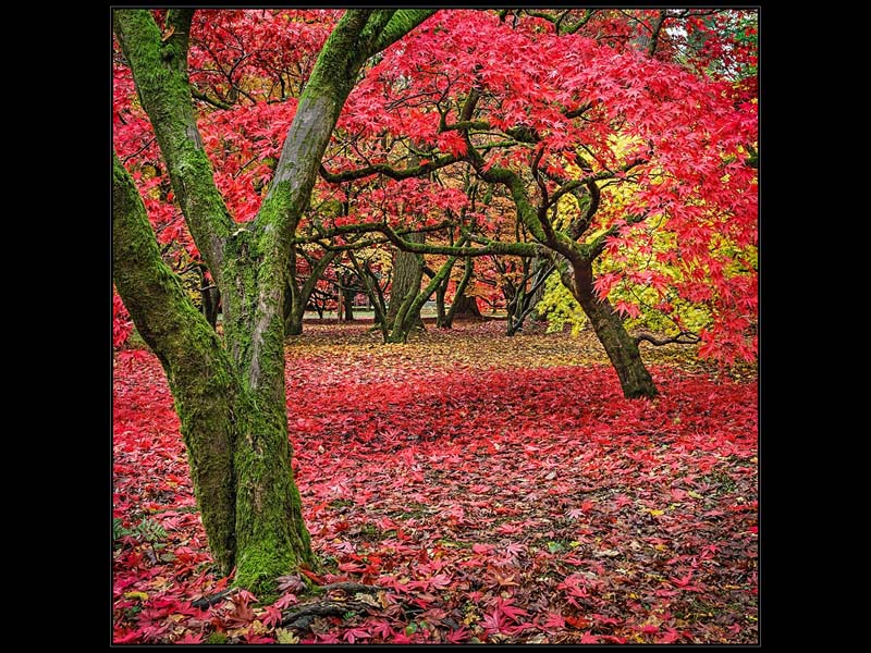Westonbirt colours sm