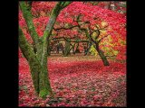 Westonbirt colours sm