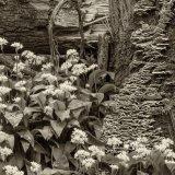 Wild Garlic and Fungi by Alan Bevis