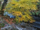 autumn on dartmoor river by mary bevis