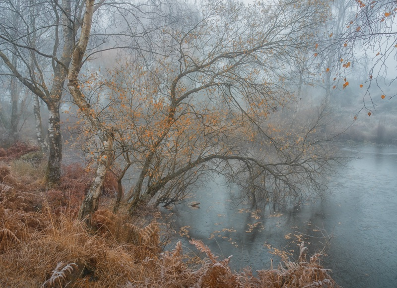autumn on heathland