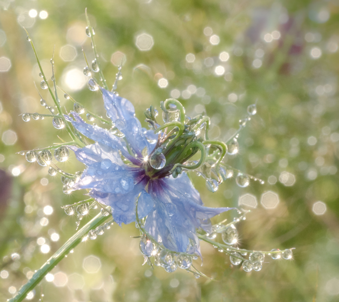 raindrops by mary bevis