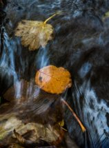 under water leaves by mary bevis