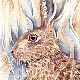 Brown hare study 1