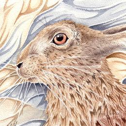 Brown hare study 2
