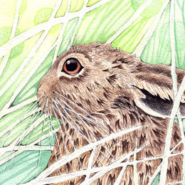 Leveret in the grass