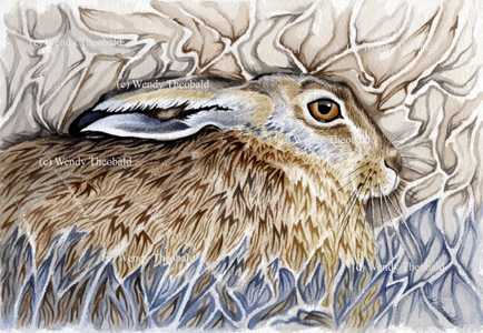 Resting Hare