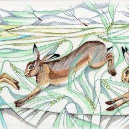 Barley Hares