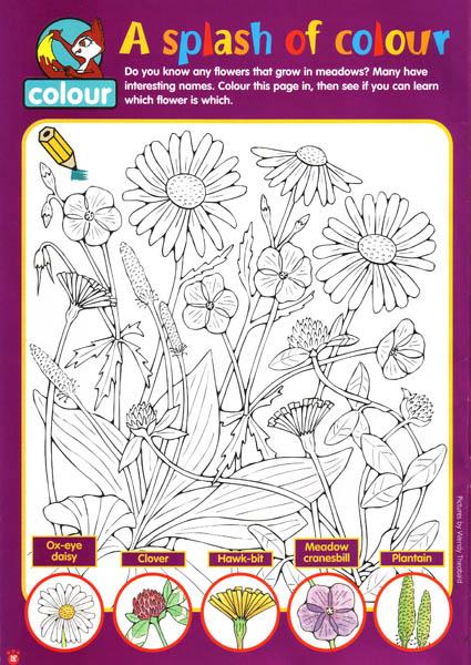 Asplash of colour , flowers