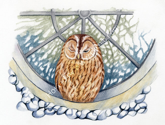 Book illustration for Tales of Flint Owl