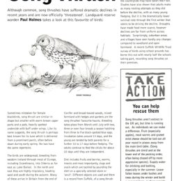 Song Thrush magazine article