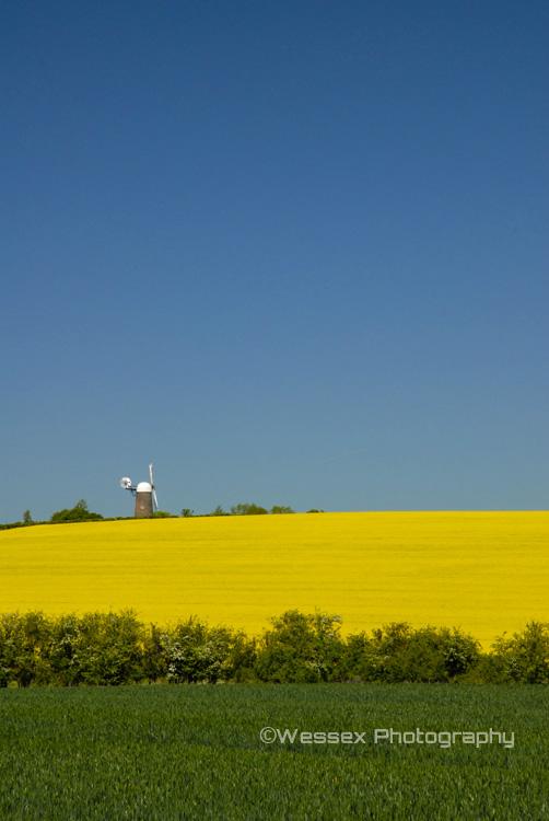 Wheat, Oil Seed Rape and Wilton Windmill