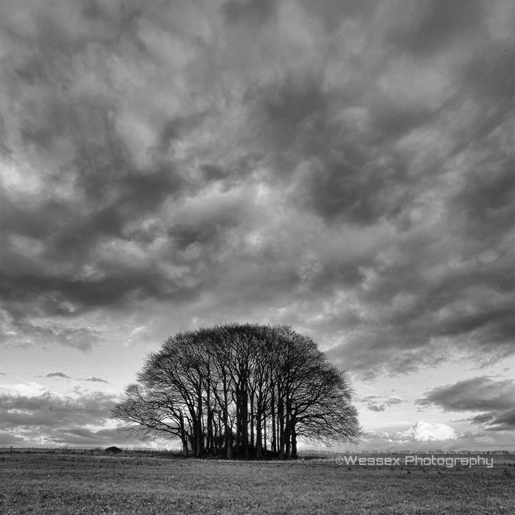 Ridgeway Trees