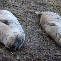2016.12.09 - Seal Pups - Donna Nook