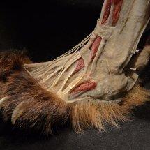 2016.12.31 - Brown Bear Foot