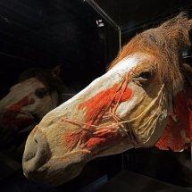 2016.12.31 - Horse Head