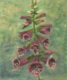 Foxgloves, Linda Darios