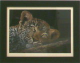 Leopard, Yvonne Gambrill