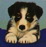 Puppy Collie on Blue Cushion, Linda Mayne
