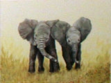 Elephants, Linda Mayne