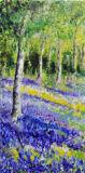 Bluebell Woods Linda Farrington