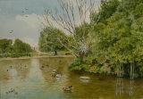 Ducks in Memorial Gardens Bob Male
