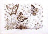 Butterflies, Judy Packwood