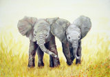 Elephants - Linda Mayne
