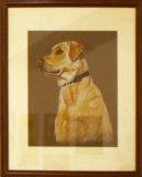 Labrador, Tina Rowland