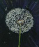 Dandelions, Linda Darios