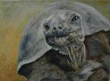 Giant Tortoise Linda Farrington