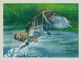Osprey - Vivienne Lateu