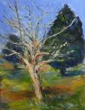 Winter tree - Daphne Ottoway
