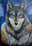 Wolf - Jean Major