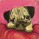 Pug - Linda Mayne
