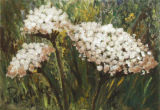 Queen Anne's Lace, Judy Packwood