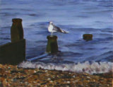 Sea and Seagull, Linda Ledbrook