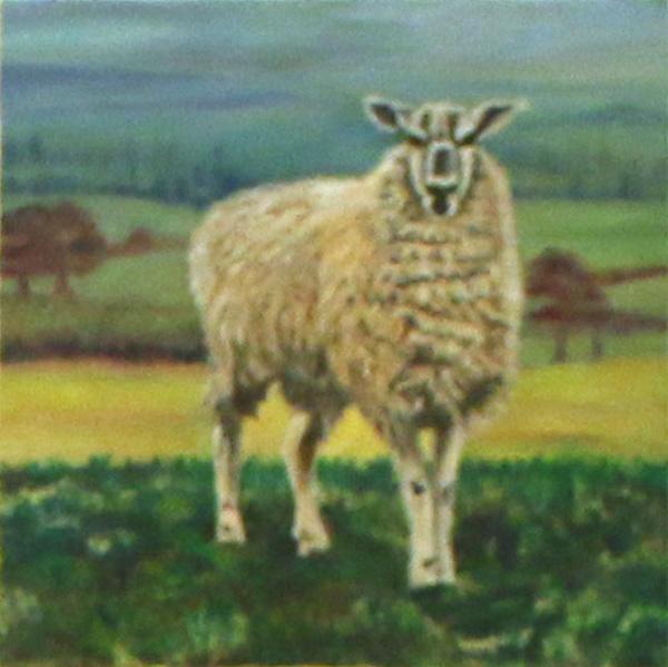 Sheep, Linda Darios