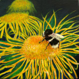 Sunflower-Bee - Linda Mayne