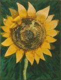 Sunflower - Judy Packwood